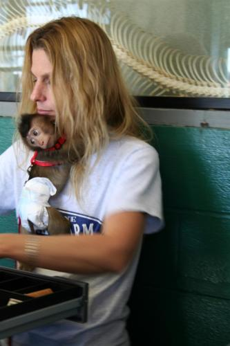 monkey-n-cashier