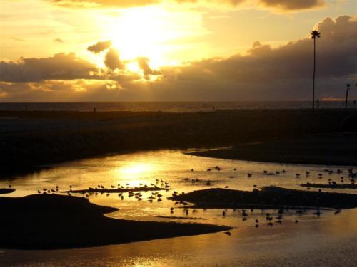 the-birds-sunset